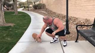 Koksa świnka ma na imię Popek ??? 2017 Video