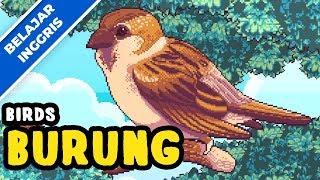 Belajar Bahasa Inggris Versi Terbaru | Burung (bird) | Lagu Anak Terpopuler 2019 | Bibitsku