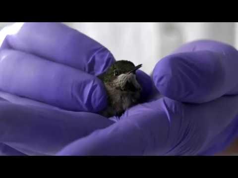 Testing Hummingbird Efficiency: Daily Planet