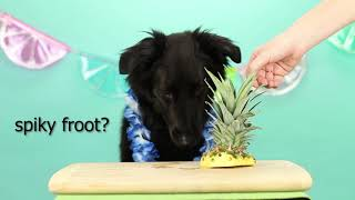 Dogs Taste Test Tropical Food