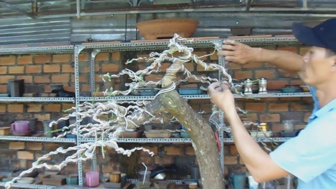 how to create a bonsai tree