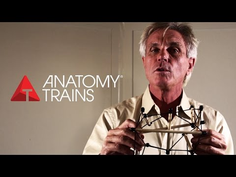 ANATOMY TRAINS - Tom Myers Full Interview