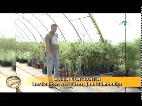 In gradina Danei 20.03.2016 interviu cu Marin Constantin - Taierea ...