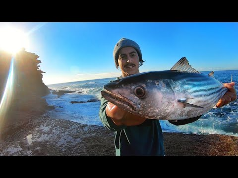 Rock Fishing For Bonito & Tailor 150m From My House - Fishing Australia