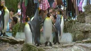 Birdland Park & Gardens - A 'Great' day out in the Cotswolds