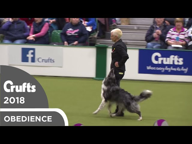 Obedience - Bitch Championship - Part 9 | Crufts 2018
