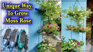 Best & Easy Way To Grow Portulaca Cuttings In Hanging Pot ll Smart Use Of Plastic Bottles In Garden