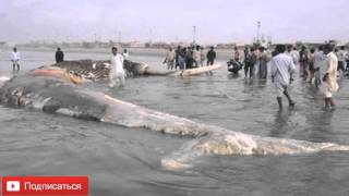 Самая большая акула в мире Топ 10 фактов