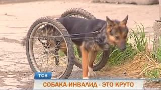 Собаки-инвалиды из пермского приюта ищут дом и любящих хозяев