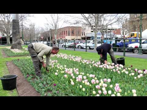 Explore Bendigo - It's tulip time!