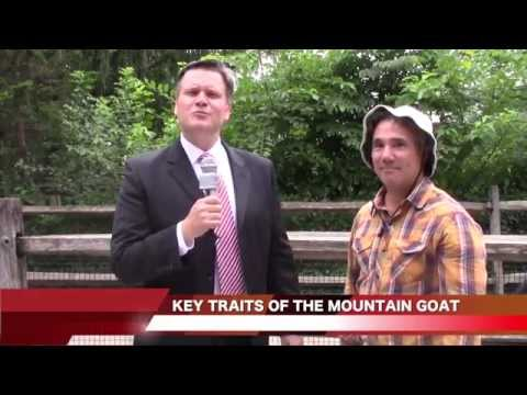 Future-Proofing Your Agency Video: Be The Mountain Goat!