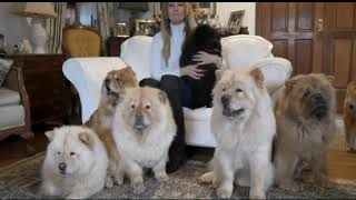 12 Most Expensive Dog Breeds in the World