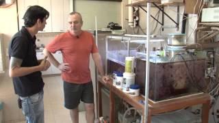 Aquario Marinho, Help Reef na sua Casa, aquarismo marinho.