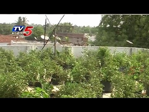 Terrace Farming | Terrace vegetable garden @ Mahabubnagar : TV5 News