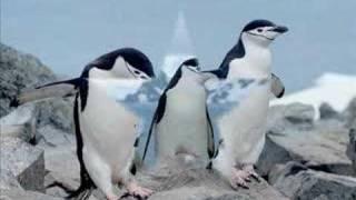 croisiere en antarctique sur le diamant