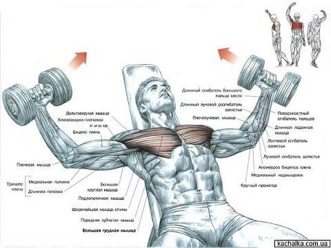 Упражнения для увеличения мужской силы, упражнения для двоих тантра