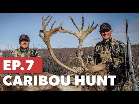 Kevin's First Caribou Bull - NWT Caribou Hunt - TMP S5:E7