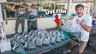 BUYING 50,000+ LIVE SHINERS to STOCK BackYard POND!!