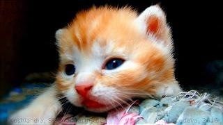 #2 kittens sleeping Solnyshko with kittens Котята спят Солнышко с котятами Lula Лула