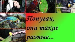 Попугаи, они такие разные...