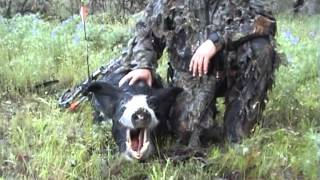 Bow hunting pigs in Western Australia
