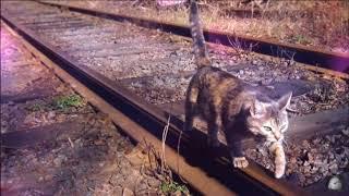 очень грустная история про кота