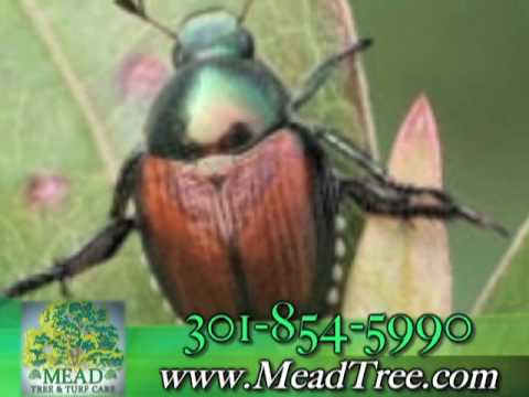 Mead Tree Turf Care Inc Landscape Contractors Woodbine Md