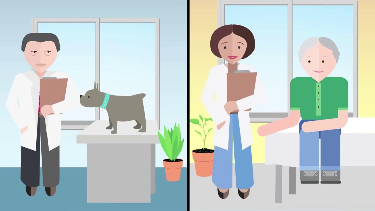 One Health, el compromiso de BAYER con las enfermedades transmitidas por vectores   from YouTube