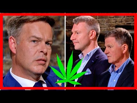Dragons' Den: Peter Jones Stunned As CANNABIS Sold On TV 'Is This An Illegal Drugs Ring?'