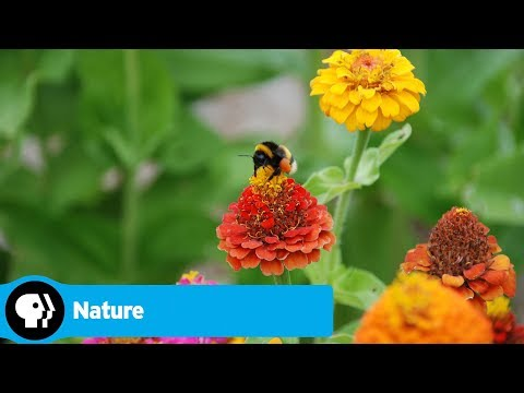 Get a Front Row Seat to the Change of Seasons in Real Time with 'Nature: American Spring LIVE'