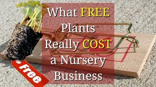 What Free Plants Actually Cost your Nursery Business