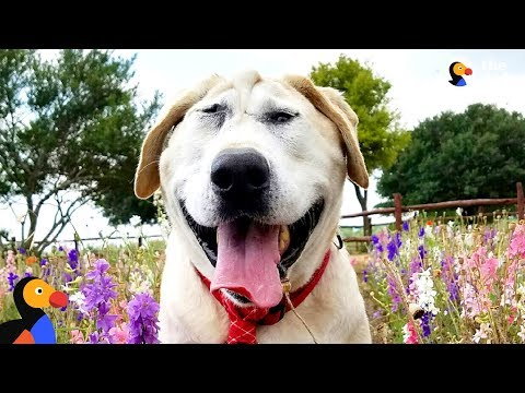 Dog No One Wanted Gets The Absolute Perfect Mom | The Dodo