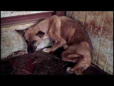 South Korean Dog Meat Cruelty