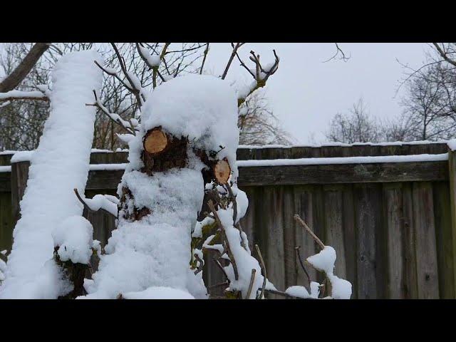 Sneugle, vildfugl med kroget næb eller bare en pind ❤ Mette