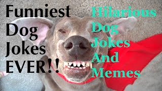 Funny Dog Jokes For Kids - Funny Jokes About Dogs - Hilarious Dog Jokes - Puppy Jokes And Memes