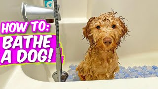Dog Hates Baths? WATCH THIS!  6 Hacks (& Products) to Bathe Dogs!