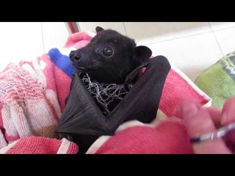 Gentle Harry the bat knows we are here to help