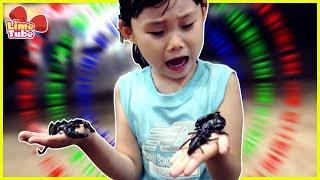 [체험]라임 전갈을 만지다! 곤충 먹는 라임아빠! | …