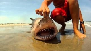 Shark in Virginia Beach!!!