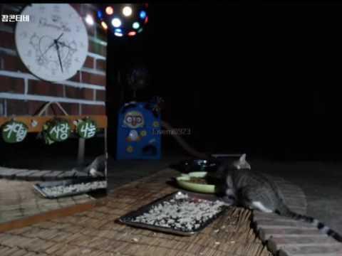 Cats Meok Bang : Stray Cats in South Korea [팝콘티비 BJ도둑고양이 나비월드] 160821 복면이 오전3시25