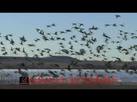 NAVAJO OUTDOORS - Duck Hunting, In New Mexico On The Navajo Nation