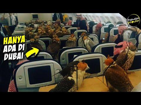 Tak DIsangka! Ternyata Begini Kehidupan Hewan Liar di Dubai