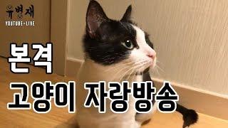 [유병재 라이브] 본격 고양이 자랑 방송