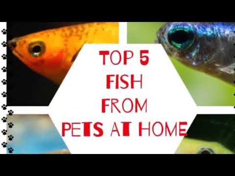 Top 5 Fish From Pets At Home