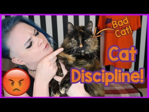 How to Discipline Your Cat Carefully and Kindly! Tips on how to Punish Your Cat and Make Them Behave
