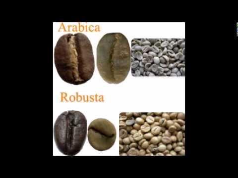Coffee Truth - Arabica Vs Robusta