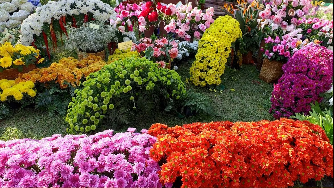 4k beautiful flower design and decoration ideas flower festival 4k beautiful flower design and decoration ideas flower festival in chiang mai thailand izmirmasajfo