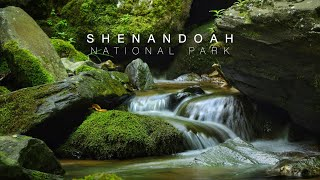 Shenandoah National Park | Hiking Dark Hollow Fall's and Mary's Rock Trails | Our RV Full Time Life