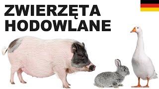 Polnisch für Anfänger - Zuchttiere 2 (Zwierzęta hodowlane)