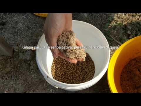 Umpan ikan Patin (Kelapa Parut Peram) Part 2